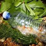 Frunza de vita de vie pentru iarna pofta buna cu gina bradea 8 150x150 - Frunza de vita de vie pentru iarna