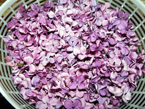 Sirop, colorant natural din maci, liliac sau soc