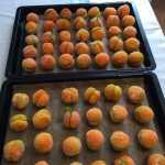 Piersicute Gena Popa 2 150x150 - Fursecuri caise-piersici, fragede si aromate