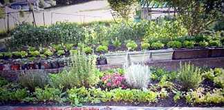 Bio-organic-ecologic-natural