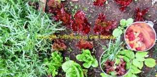 De ce prefer produsele organice (bio)