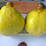 gutui coapte la cuptor cu miere scortisoara nuca de cocos si nuca 2 150x150 - Gutui coapte la cuptor cu miere, scortisoara, nuca de cocos si nuca